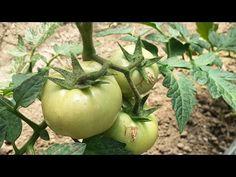 Make It Yourself, Vegetables, Garden, Youtube, Solar, Agriculture, Plant, Garten, Lawn And Garden
