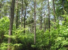 timberland tracts for sale in alabama