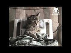 Automated cat massage