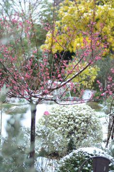 Catégorie : Jardins privés // ©HeleneV