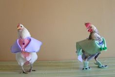 Since it is impossible to potty-train a chicken, many people that have pet chickens opt for chicken diapers. Description from bitrebels.com. I searched for this on bing.com/images