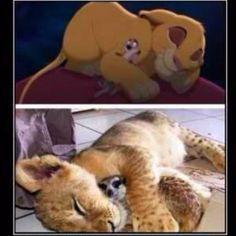 Baby Simba n Timon