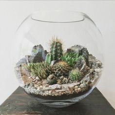 Bioattic - Desert World Terrarium