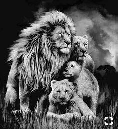Leones tattoos lioness tattoo, lion tattoo и animal tattoos Lion Head Tattoos, Mens Lion Tattoo, Lion Images, Lion Pictures, Lion King Art, Lion Art, Beautiful Cats, Animals Beautiful, Cute Animals