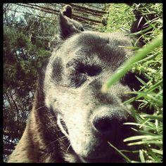 Luke <3 in the grass