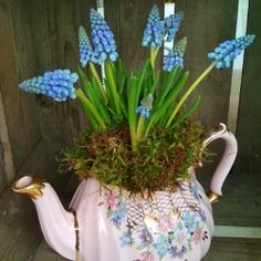 A DIY round up of ways to bring spring bulbs into your home, by florist Becky Hay from Blossom.