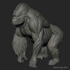 b6f7b019d5016f3e3015c72b7c0d2a0d--gorilla-anatomy-gorilla-illustration.jpg (736×732)