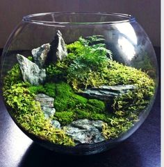 Stunning terrarium that reminds me of Scotland.