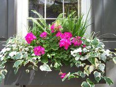 windowbox Window Box Plants, Window Box Flowers, Window Planter Boxes, Flower Boxes, Container Flowers, Flower Planters, Garden Workshops, Little Gardens, Garden Windows