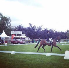 Sam Watson and Horseware Bushman doing their dressage at Tattersalls International Horse Trials. #tatts2014 #horses #eventing