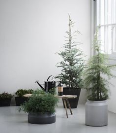 Create a 'Green Christmas' by decorating with stylish pots in your home. You might even use the pots as dividers, to create small peaceful 'islands' or cosy corners in larger rooms. #regram @greenifydk #fermliving #greenify #pots #plant #hanger #geometric #minimalistic #stoneware #modern #home #scandinavian #interior #design #danish #styling #greenliving #green #living