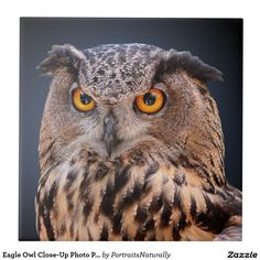 Eagle Owl Close-Up Photo Portrait Small Square Tile - This unique ceramic tile features a face-on close-up head shot photograph of a mottled brown eagle owl showing its distinctive orange eyes. This bird of prey is presented against a gradient blue to black background. http://www.zazzle.com/eagle_owl_close_up_photo_portrait_small_square_tile-227022417532024504?size=square_large&rf=238083504576446517&tc=pint