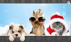 My website sells pet products like dog collars,clothes, shoes, litter box liners. http://amazingpetproducts4u.com