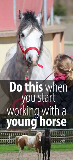 Starting your horse and the begging of the whole training process is the most important part of your horses' life. At least when it comes to the abilities and willingness to listen that he is going to have in the future. Starting your horse is about introducing him to the idea of carrying a saddle…Continue Reading →