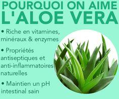 Découvrez les bienfaits de l'Aloe Vera.