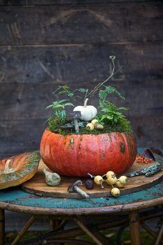 őszi tök dekoráció
