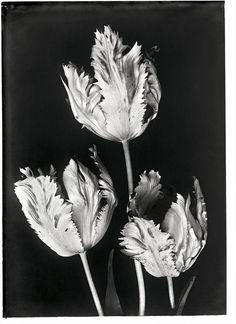 Silent Beauties, photography by Leendert Blok, Hatje Cantz