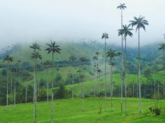 Just got back from 2 weeks in Colombia. The Valle de Cocora was absolutely surreal and was my #1 favorite destination there. #travel #ttot #nature #photo #vacation #Hotel #adventure #landscape http://bit.ly/2gD8a2N