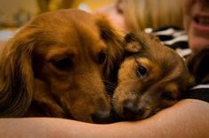 15 Heart-Melting Mom And Pup Portraits