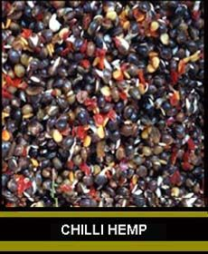 Chilli Hemp gets a lot of interest not only from anglers but from the carp too