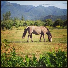 Curico, Chile Chile, Horses, Spaces, Travel, Animals, I Love, Cute, Cities, Scenery