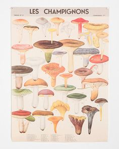 This vintage-inspired poster features images from museums and archives throughout the world. Great for framing! Buy it here: http://www.bhg.com/shop/urban-outfitters-exclusives-mushroom-specimen-poster-p5018f58e82a797dc894be969.html