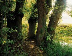 Journey Through the British Isles. Set 1 « Photo categories « Harry Cory Wright