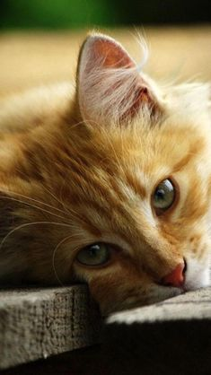 """""""We can judge the heart of a man by his treatment of animals."""" --Immanuel Kant #beautifulcats"""