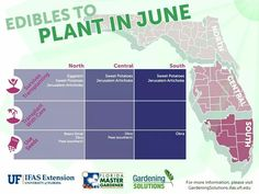 Edibles to plant in June