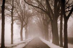 Enter In Series II-Trees in Fog
