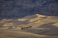 Gobi Deserto, Mongolia