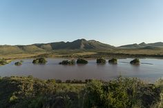 Built in Thorn Springs farm has a rich history filled with myth and local legend passed from mother to daughter, father to son. Local Legends, Rental Property, Dog Friends, Pools, Countryside, South Africa, Wildlife, River, Vacation