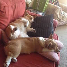 corgi-nap :) that's why you have to have 2!
