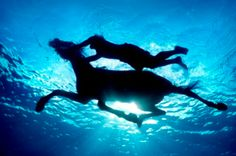 Water, Horse, Swimming together ~ Bliss.                                          Gorgeous underwater photo by Zena Holloway