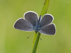 Small Blue Blue
