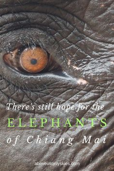 How we spent an emotional day with elephants at Lek Chailert's Elephant Nature…