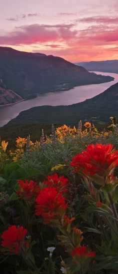 ✯ Columbia River Gorge from Dog Mountain - Washington. Spring would be the perfect time to hike Dog Mountain Trail and see all the flowers and the amazing views! Beautiful World, Beautiful Places, Beautiful Pictures, The Places Youll Go, Places To See, Flower Carpet, Nature Sauvage, Columbia River Gorge, Le Far West