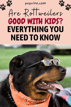Rottweiler Breed, Online Dog Training, Rottweilers, Puppy Mills, Kind, Need To Know, Dog Breeds, Cute Dogs, Children