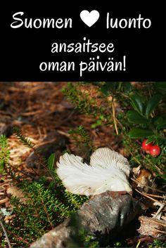Nyt on aihetta juhlaan: Suomen luonnon päivä | Live now – dream later…