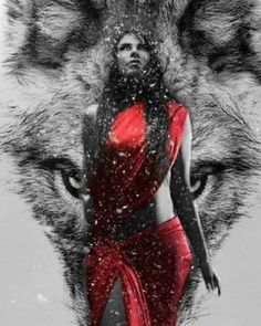 By Artist Unknown. Wolves And Women, Werewolf Art, Wolf Quotes, Wolf Love, Beautiful Wolves, Fantasy Pictures, Red Moon, Illustration Girl, Red Riding Hood