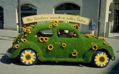 Sunflower shag