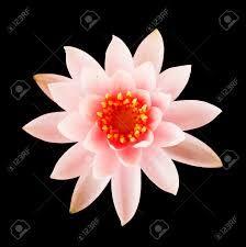 Risultati immagini per fiori di loto