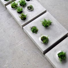 Urban growth series of paving stones that host vegetation, by allowing flexible customization and integration of greenery on the paved urban floor. Grey to Green // Caroline Brahme