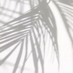 Wooooeeee the new palm trees and succulents have arrived in the office. If you're lucky I might share a pic of the office with you soon! For now you'll have to stick with this beautiful shadow the palm is casting...