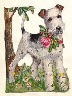 All about VINTAGE: Poesie album plaatjes fox terrier Wirehaired Fox Terrier, Welsh Terrier, Wire Haired Terrier, Wire Fox Terrier, Dog Love, Puppy Love, Smooth Fox Terriers, Old Greeting Cards, Dog Illustration