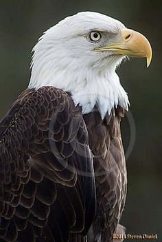 Pretty Birds, Beautiful Birds, Tampa Zoo, Eagle Pictures, Pictures Of Bald Eagles, Eagle Images, Eagle Art, School Of Visual Arts, Fine Art Photography