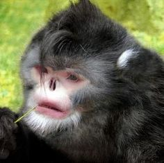 New Species of Monkey Named in Honor of the Late Michael Jackson