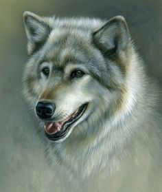 Rebecca Latham Wolves | Picture :Silver-Wolf.. Rebecca Latham (painting.)