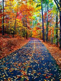 Estrada no outono.