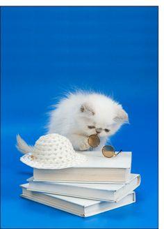 Carte Petit chat et livres pour envoyer par La Poste, sur Merci-Facteur !